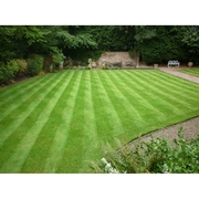 Lawn 05