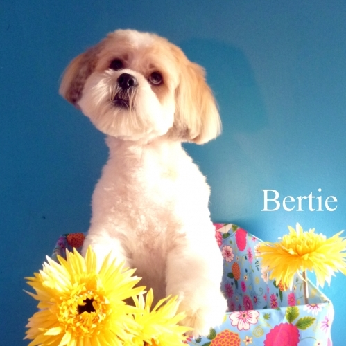 Bertie -such a cute customer!