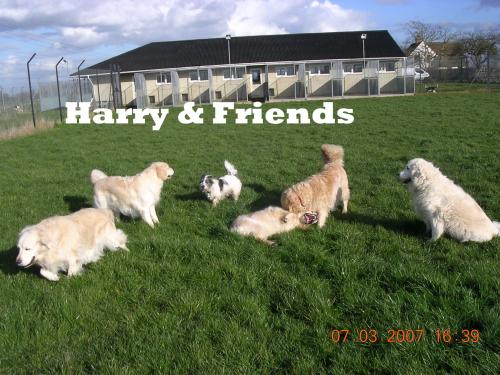 Dog Kennels In Didcot