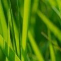 Free Lawn Aeration