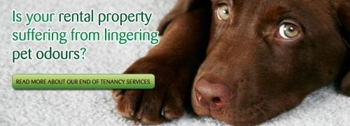 End of tenancy cleaning? Want your deposit back? Call us today.