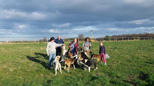 Delta Dog Training Newcastle