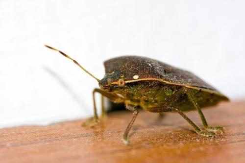 Bug Removal London
