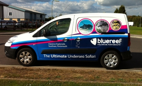 Blue Reef Van Graphics - Something Fishy !!