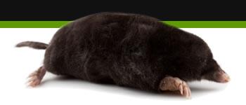 Bg Middleright Moles