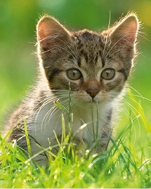 Cats Protection Exeter Uk