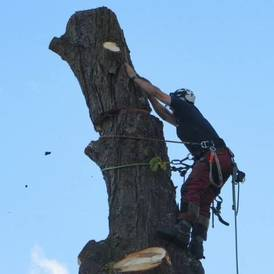 Tree felling Coventry