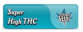 Super High THC Cannabis Seeds
