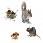 Norfolk & Norwich Pest Control