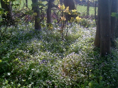 Our local wood in Spring