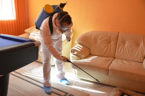 Bed Bugs removal services