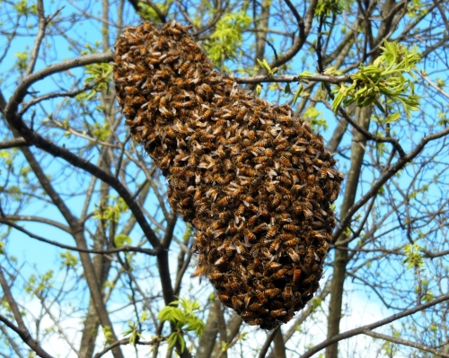 Bee Nest Removal Redhill