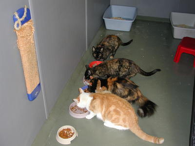All from the same household enjoying their meal together as they do at home.