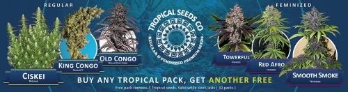 Tropical seeds cannabis seeds offer