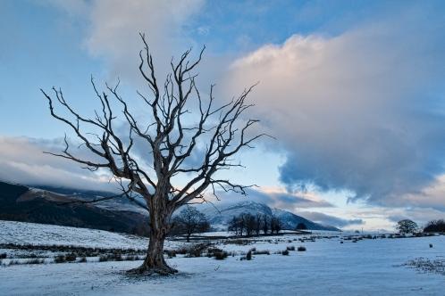 Long dead tree hangs over Blencathra High nest Keswick...