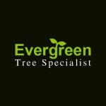Evergreen Tree Specialist