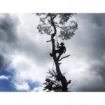 Treeworks Cornwall Ltd