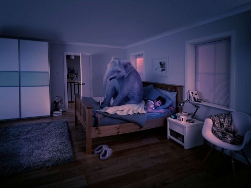 Elephant On Bed