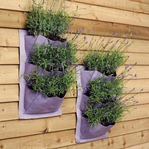 Lavender Verti Plant - £9.95 pack of 2