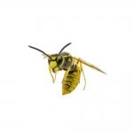 Gavlars Pest Control