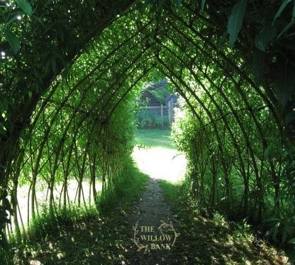 Cool and Shady in a Living Willow Structure