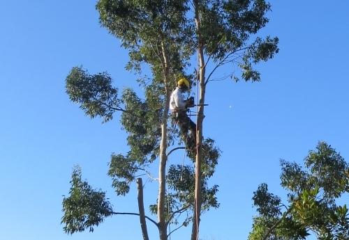 Flat Cut, Tree Removal Bristol