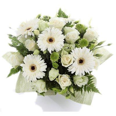 Gerbera Delight - Home of Flowers - Westcliff