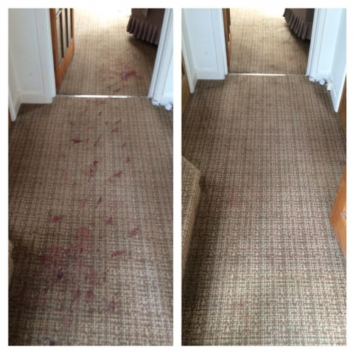 Carpet Cleaning - Before & After