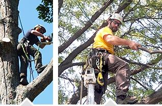 Tree Climbers