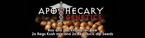 Apothecary genetics cannabis seeds offer